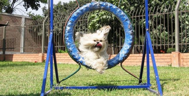 salto de rueda