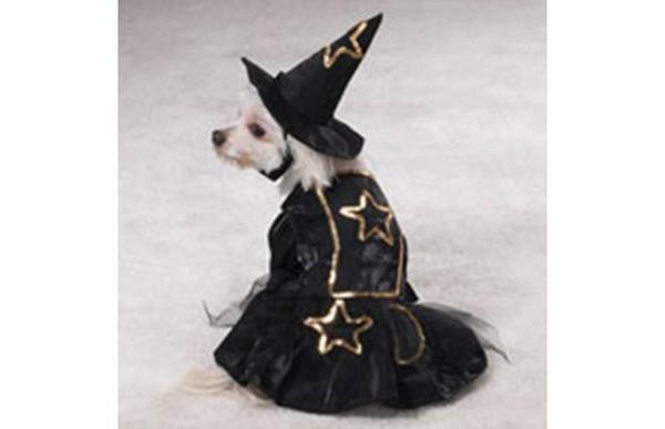 disfraces para mascotas10489047 3 2009311 10 0 54