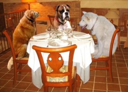 ¿Por qué humanizamos a las mascotas?